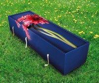 gerbera coffin grass